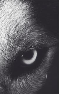 « Nos loups » Werewo10